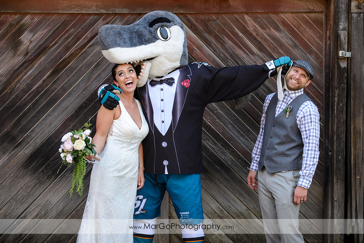 bride and groom with sharkie at Picchetti Winery in Cupertino