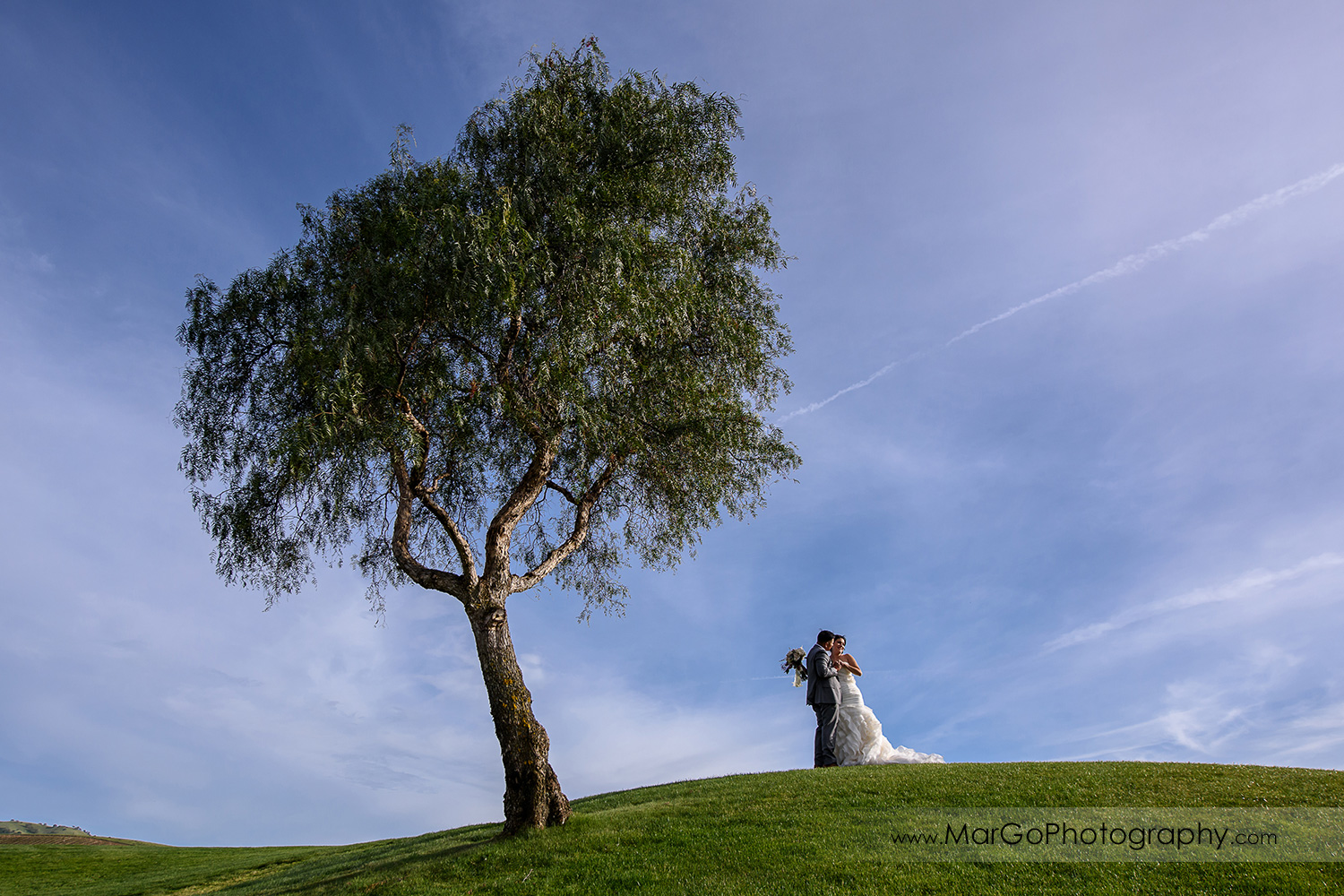 bride and groom under the tree at Poppy Ridge Golf Course in Livermore